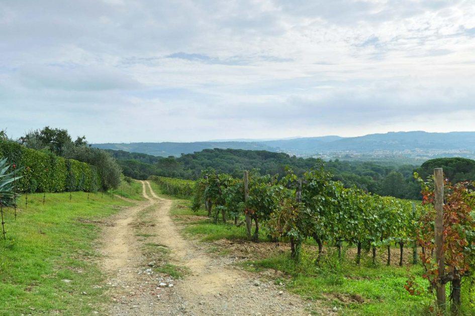 Weg durch die Weinberge in der Toskana bei Artimino