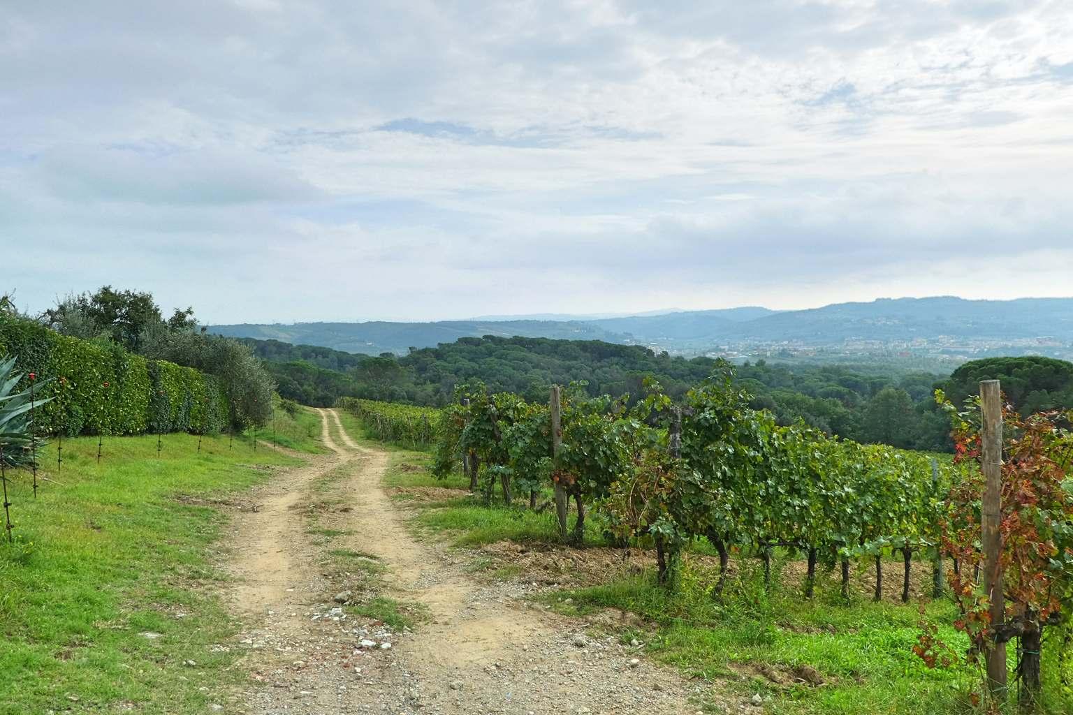 Weg durch die Weinberge in der Toscana