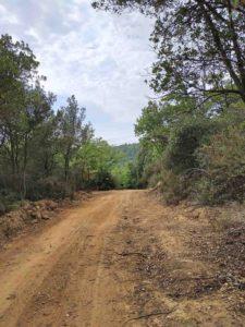 Erdstraße im Wald von Artimino