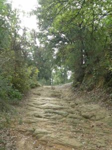 Waldweg bei Artimino